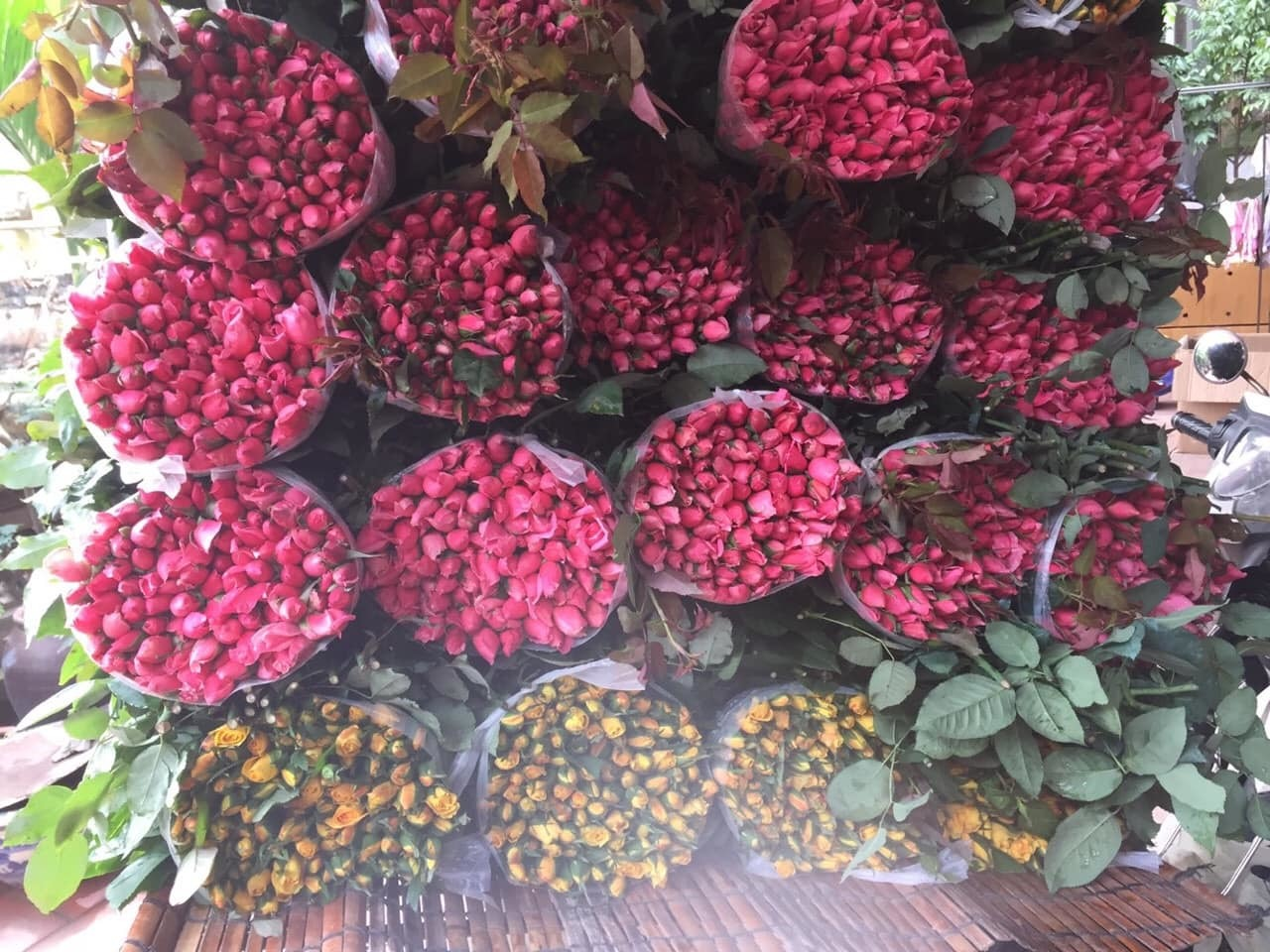 200 đồng/bông hồng, hoa rẻ chưa từng có, mỗi ngày bán cả vạn
