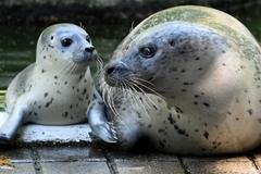 Quá túng thiếu do đại dịch, sở thú Đức phải tính kế cho động vật ăn nhau
