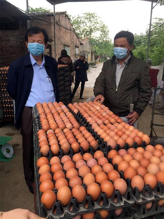 Trứng gà rẻ hơn rau, phá sản vì cảnh cả đời chưa từng có