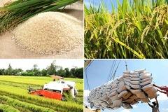 Bộ Tài chính đề nghị Bộ Công an điều tra về xuất khẩu gạo