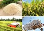 Vênh con số và chuyện lúc 0 giờ, loạn nhịp xuất khẩu gạo