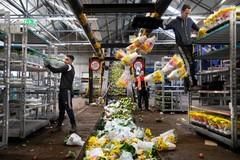 Nhổ bỏ hàng triệu cây hoa, nhà vườn đau xót không dám nhìn