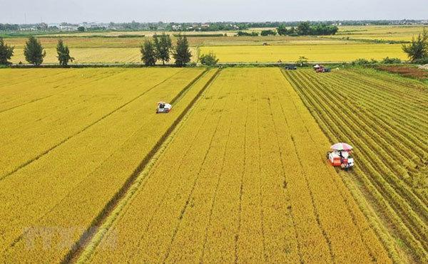 VN needs market of agricultural land