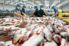 Mekong Delta catfish farmers worry about lower prices