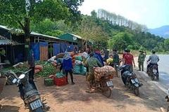 Xoài Sơn La rụng trắng vườn chỉ 1.000 đồng/kg, cho không ai lấy