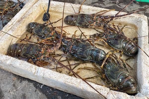 Đặc sản rẻ chưa từng có: Tôm hùm mất giá rao vỉa hè, cá hồi ế trăm tấn