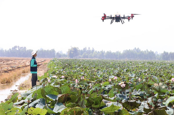 Dong Thap farmers adopt drones to spray crops