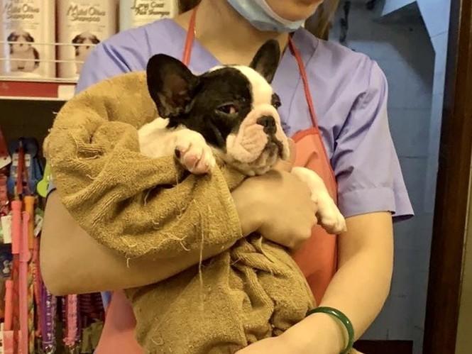 Dịch vụ đón thú cưng đi tắm, giải khuây cho chó mèo 'đắt hàng' mùa dịch