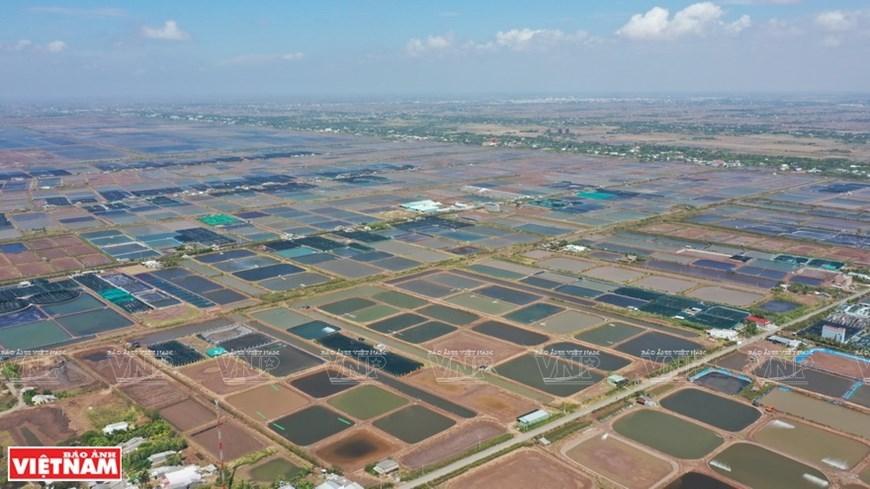 Vietnam's capital of shrimp farming