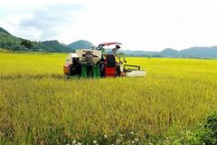 Yanmar Việt Nam thu máy gặt cũ, đổi máy gặt mới