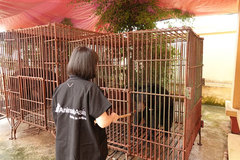 Three captive bears in Nam Dinh rescued and taken to Vietnam Bear Rescue Centre