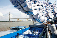 VN government cautious about exporting rice despite plentiful supply