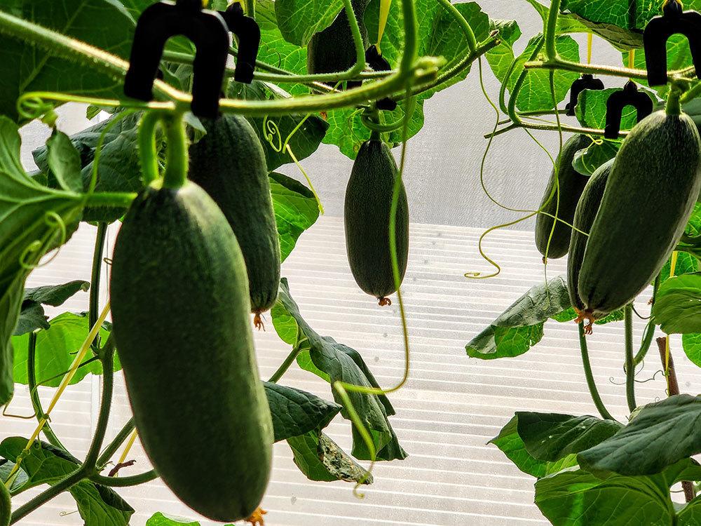 Ông chủ Đồng Nai trồng rau thả cá trên sân thượng, vợ 3 năm không cần đi chợ
