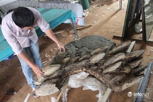Cây nấm lạ ở Đắk Lắk, nhìn như hòn đá khổng lồ, trả 1 tỷ chưa bán