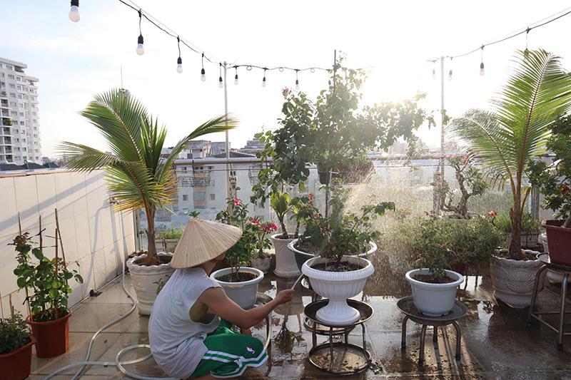 Phan Hiển trồng vườn hồng trăm triệu trên sân thượng cho Khánh Thi