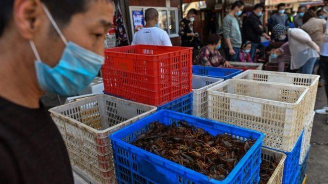 Coronavirus: Australia urges G20 action on wildlife wet markets