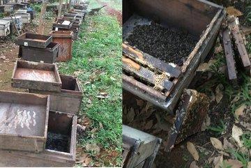 Nghi án 315 thùng ong bị đầu độc bằng hóa chất ở Quảng Trị