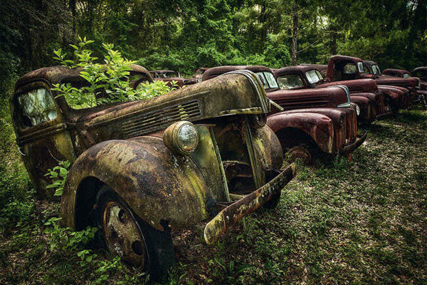 Vẻ đẹp ma mị của những chiếc ô tô bị thiên nhiên xâm lấn