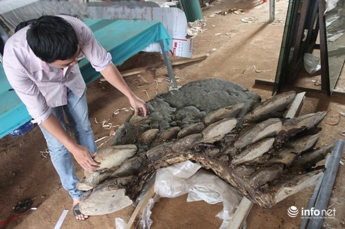 Cây nấm 2 tạ ở Đắk Lắk, đàn rùa khổng lồ 100kg/con tại Hà Nội