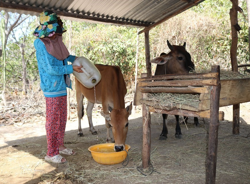 Ninh Thuan farmers face severe drought