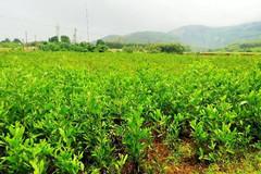 Thủ tục xin cấp Giấy chứng nhận sử dụng đất nông nghiệp