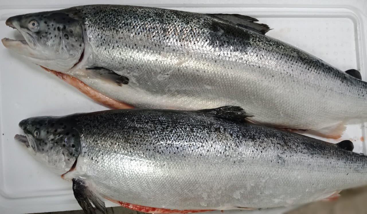 Cá hồi, tôm hùm ồ ạt giảm giá, mâm cỗ đặc sản ngày nghỉ lễ