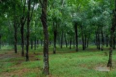 Thu hồi đất dự án sân bay Long Thành, nhiều khu đất vắng chủ chưa được xử lý