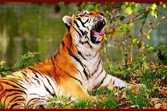 Kinh nghiệm phong thuỷ khi treo tranh rồng, hổ trong nhà