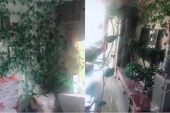 Vắng nhà vì Covid-19, dây leo mọc kín căn hộ, nấm mọc trên bàn trà