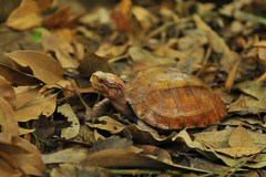 Cuc Phuong park home to rare turtles