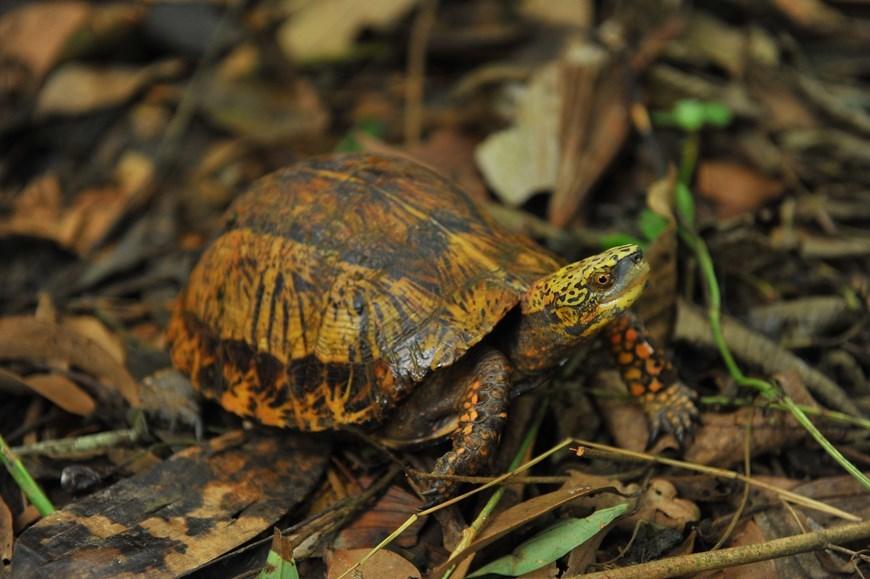 Cuc Phuong park home to rare turtles