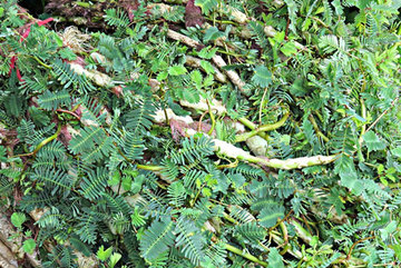 Nhìn tưởng cỏ dại, đầy ao hồ ở Việt Nam, đem về trồng lại có tiền 'ngập túi'