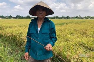 Dã tâm cắm cọc sắt xuống ruộng phá máy gặt lúa ở Quảng Trị