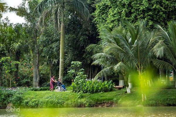 Ngắm đàn thiên nga thân thiện trong 'thành phố triệu cây xanh'