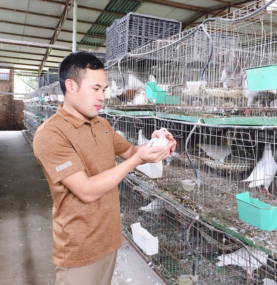 Bỏ nghề lập trình, trai Hà Nội về nuôi chim, thu 15 tỷ, lãi 3 tỷ/năm