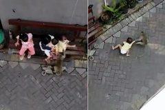 Rùng mình cảnh bé gái đang ngồi chơi bị khỉ lao đến kéo lê trên đường