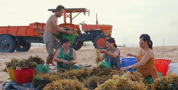 Nước rong biển ép - lời giải mới cho đầu ra nông sản Việt