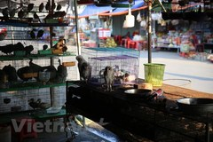 Wildlife markets sell birds with phony legal documentation