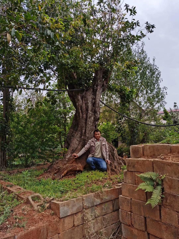 Trung Quốc chịu chi 12 tỷ mua cặp cây 'khủng', đại gia vẫn chưa chịu bán