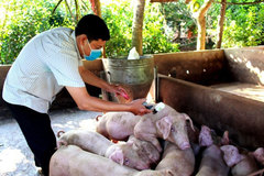 Vietnam to promote pig farming