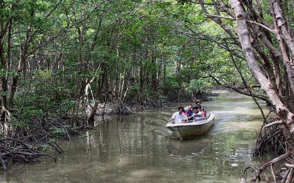Mekong Delta,Ca Mau,beautiful mangrove forests,attracted many visitors