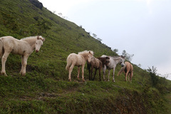 In the kingdom of Huu Kien white horses