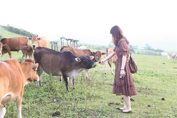 Lang Son,Chi Lang District,Khau Sao Meadow,kingdom of Huu Kien white horses