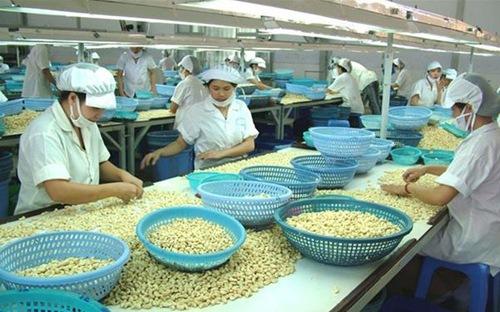 VN cashew industry fails to meet export targets