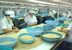 VN cashew industry fails to meet export targets