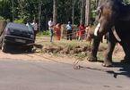 Ô tô Maruti 800 bị mắc kẹt bên đường phải nhờ voi đến giải cứu
