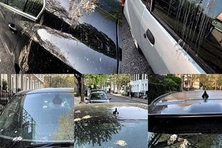 Ford sáng chế loại sơn ô tô mới chống được phân chim