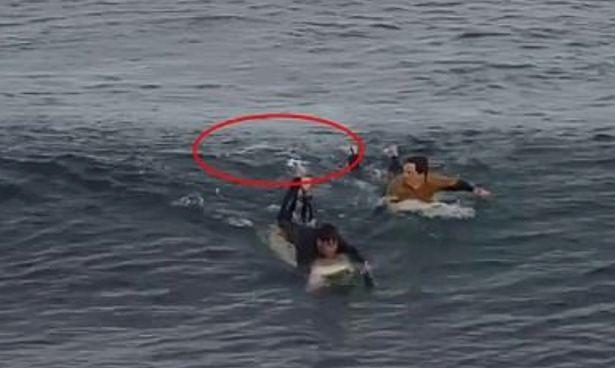 Chàng trai hành động khó tin khi bị cá mập tấn công
