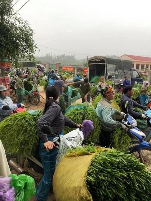 Ngọn su su 2.000 đồng/kg, nông dân xót xa vì bán không ai mua