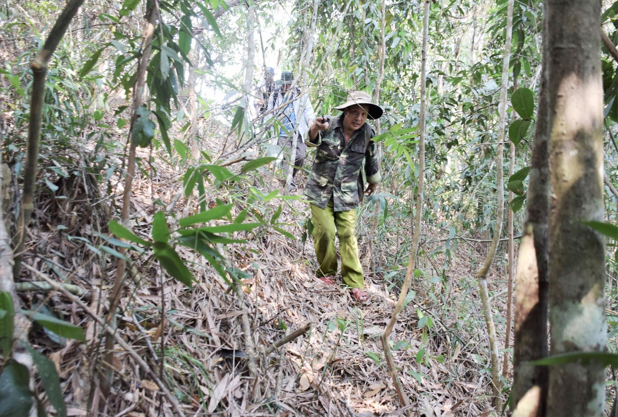 Cao thủ xứ Quảng săn loại nấm quý giữa rừng Nam Giang